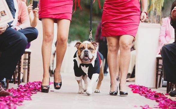 dog usher 2