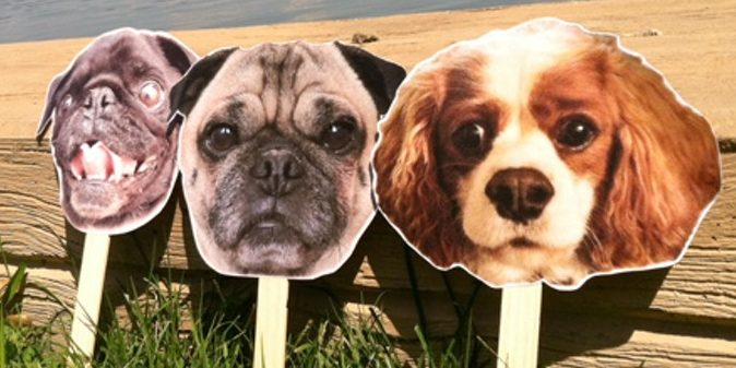 photo booth pet props